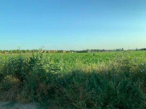 フランスののどかな畑風景