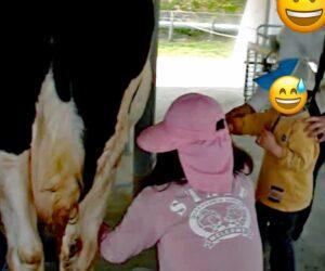 大阪府民牧場で乳しぼり