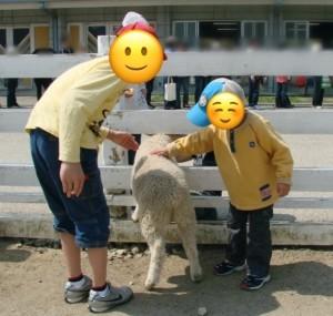 大阪府民牧場の子羊